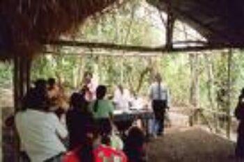 jungle-church