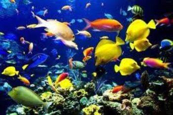 many-different-fish.jpg