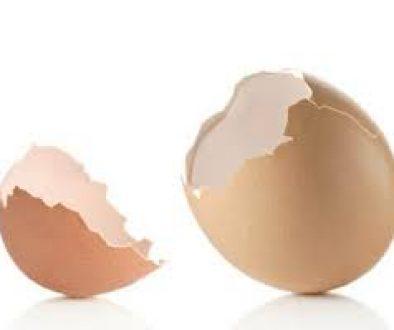 empty-egg